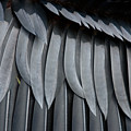 Cormorant Wing Feathers Abstract by John Harmon