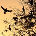 Cormorants At Sunset by Matt Suess