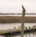 Cormorants On The Dock At Murrells Inlet by MM Anderson