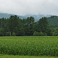 Corn Among The Mountains by Meandering Photography