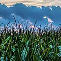 Corn And Clouds Panorama by Edward Moorhead