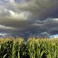 Corn Field Beform Storm by W Scott McGill