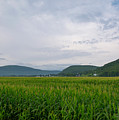Corn Fields, Upstate New York by Joan D Squared Photography