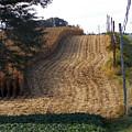 Corn Harvest by Skip Willits