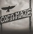 Corn Maze by Bob Orsillo