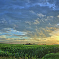 Corn Oceans by Bonfire Photography