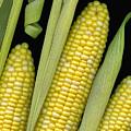 Corn On The Cob I  by Tom Mc Nemar