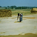 Corn Processing by Ujjwal Rout