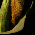 Corn Silk by Linda Shafer
