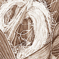 Corn Silk - Neutral by Lori Taylor