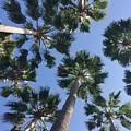 Corner Palms by T Henderson