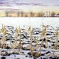 Cornfield In Winter by Conrad Mieschke