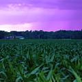 Cornfield Landscapes Purple Rain by Cathy Beharriell