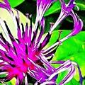 Cornflower  by Kat J
