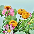 Cornflowers 20 by Kim Bemis