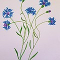 Cornflowers by Margaret Welsh Willowsilk