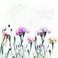 Cornflowers Watercolor  by Svetlana Foote