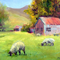 Coromandel New Zealand Sheep by Michelle Philip
