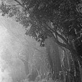 Corridor Of Mist by Lori Seaman