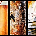Corrugated Iron Triptych #10 by Lexa Harpell