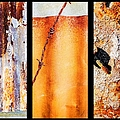 Corrugated Iron Triptych #8 by Lexa Harpell