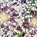 Cosmic Blooms by Violeta Ianeva