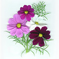 Cosmos Bouquet by Sandi F Hutchins