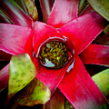Costa Rica Flower by Sonal Dave
