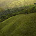 Costa Rica Pasture by Madeline Ellis