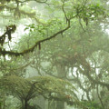 Costa Rican Cloud Forest by Matt Tilghman