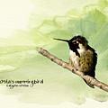Costa's Hummingbird  by Beve Brown-Clark Photography