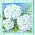Cottage At The Shore 5 White Hydrangea Floral Over Wood by Audrey Jeanne Roberts