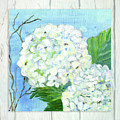 Cottage At The Shore 6 White Hydrangea Blossoms W Twigs And Whitewashed Wood by Audrey Jeanne Roberts