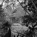 Cottage Black White Gardens Louisiana  by Chuck Kuhn