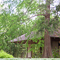 Cottage Orange Island  Louisiana  by Chuck Kuhn