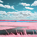 Cotton Candy Marsh by Brian Hale