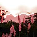 Cotton Candy Sunset 4 by Ken Figurski