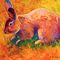 Cottontail I by Marion Rose