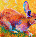 Cottontail II by Marion Rose