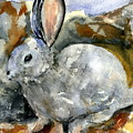 Cottontail In Camouflage by Marilyn Barton