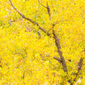 Cottonwood Colors  by James BO Insogna