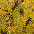 Cottonwood Fall Foliage Colors by James BO Insogna