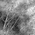 Cottonwood Skies by Jeanette C Landstrom