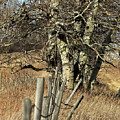 Cottonwood Stand by Ann E Robson