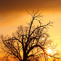 Cottonwood Sunrise - Vertical Print by James BO  Insogna