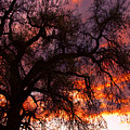 Cottonwood Sunset Silhouette by James BO Insogna