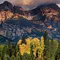 Cottonwoods Fir Trees Fall Color Grand Tetons Nat by Dave Welling