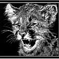 Cougar Cub by Judy Allen