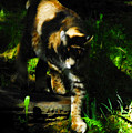 Cougar Eyes by David Lee Thompson