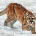 Cougar In The Snow by David Stribbling
